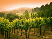 California Wine Country, CA